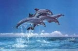 Dolphins.  Dolphin facts